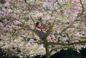 Jade Morris - Violinist Bristol, South West