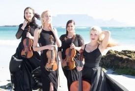 The Hello String Quartet - String Quartet South Africa, Western Cape