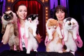 The Savitsky Cats  - Other Speciality Act - Sacramento, California