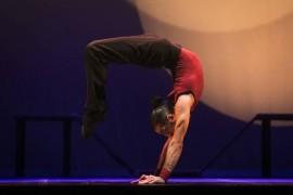 Dino - Circus Performer -