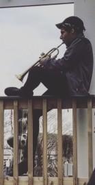 Kelvin Sabino - Trumpeter - United States, New York