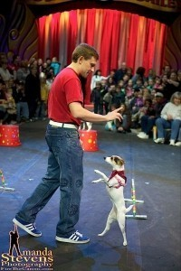 Amazing Performing Pets - Other Speciality Act